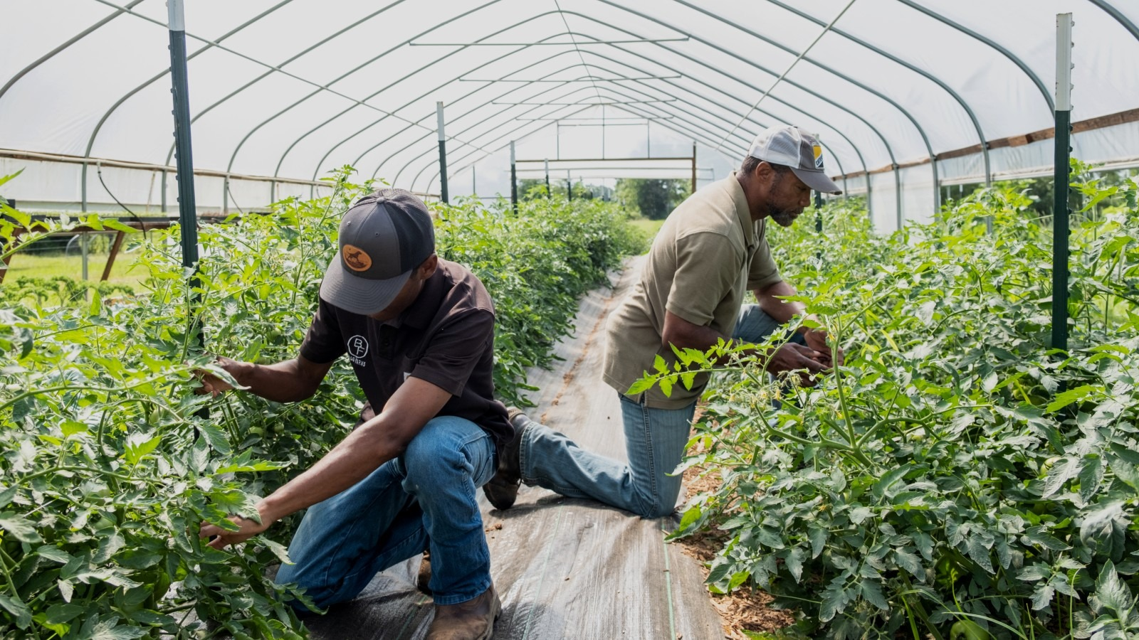 Two workers tend to produce growing at Bugg Farms, a Common Market partner